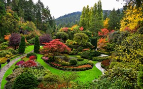 Picture nature, Park, shrubs, landscaping
