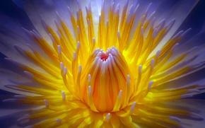 Picture flower, macro, mid