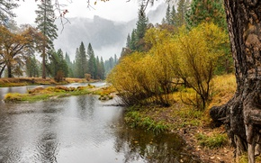 Picture autumn, forest, trees, mountains, fog, river, rocks, morning, USA, Yosemite, the bushes