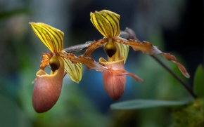 Picture macro, nature, petals, exotic, Orchid