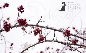 Picture ice, winter, berries, red, white, contrast, calendar, Rowan, January, 2017, justnvsky, ledjanogo