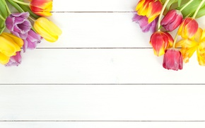 Picture flowers, spring, colorful, tulips, fresh, wood, flowers, beautiful, tulips, spring, bright