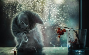 Picture cat, light, glare, window, kitty, bokeh