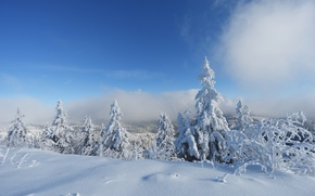 Picture Clouds, Winter, Trees, Snow, Forest, Frost, Clouds, Winter, Frost, Snow, Forest, Trees