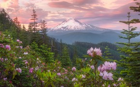 Picture forest, the sky, flowers, mountain
