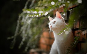 Picture cat, portrait, bokeh, white cat
