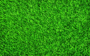 Wallpaper grass, background, lawn, green, summer, grass, green