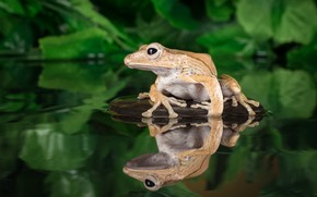 Picture water, stone, frog