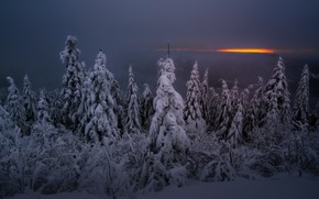 Wallpaper winter, forest, night