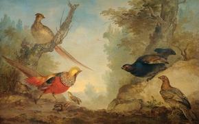 Wallpaper Pheasants, Art Schumann, birds, oil, picture, canvas, animals