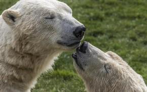 Picture white, feelings, bear, pair