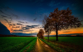 Picture road, field, trees, glow