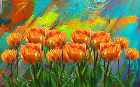 Picture Flowers, Figure, Tulips