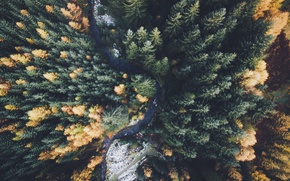 Wallpaper nature, forest, autumn, the view from the top, trees