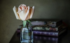 Picture style, rose, books, blur, Bud, bottle, bubble