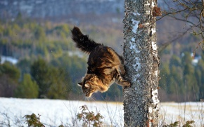 Picture winter, cat, cat, tree, parkour