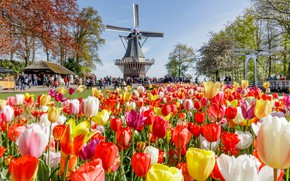 Picture the sun, trees, flowers, Park, people, mill, tulips, Netherlands, colorful, people, Keukenhof