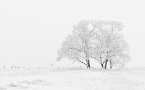 Picture Winter, Field, Trees, Snow, Frost, Blizzard, Winter, Frost, Snow, Field, Trees, Blizzard