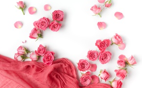 Picture roses, buds, pink, flowers, romantic, roses