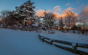 Picture winter, snow, trees, the fence, the evening, path