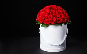Picture flowers, roses, bouquet, red, red, box, flowers, romantic, Maxim Denisenko