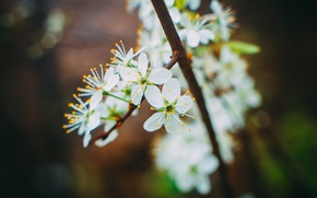 Picture flowers, nature, spring, beautiful, may, Apple