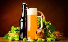 Picture foam, basket, bottle, beer, alcohol, malt, beer, foam, hops, hops, malt