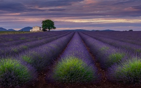 Picture field, the sky, clouds, flowers, house, the evening, lavender, Provence, Include The Valensole Plateau
