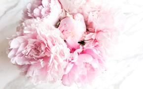 Wallpaper flowers, flowers, bouquet, tender, peonies, pink, marble, peonies, marble