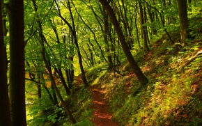 Picture Spring, Path, Trees, Forest, Nature, Spring, Forest, Trees