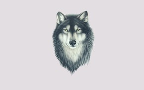 Wallpaper face, wolf, look