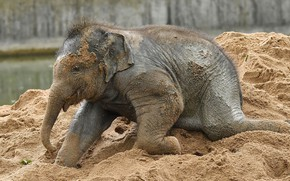 Picture sand, the game, elephant, baby