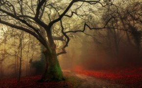 Picture road, autumn, forest, fog