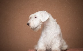Picture white, animal, Dog, puppy