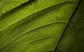 Picture macro, sheet, texture, veins