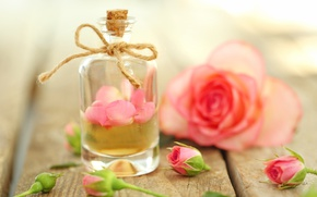 Picture perfume, petals, rose, pink, petals, pink roses, oil, anoint