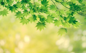 Wallpaper leaves, branches, nature, tree