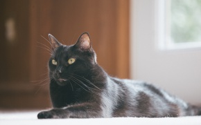 Wallpaper black, cat, lies