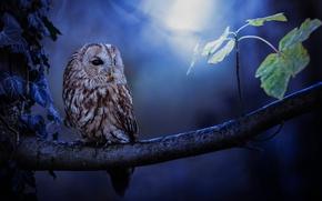 Picture owl, foliage, branch, bokeh