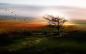Picture field, birds, fog, tree, morning