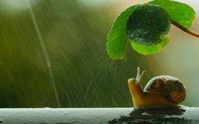 Picture macro, umbrella, rain, snail, leaf