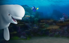 Picture cinema, movie, animal, friendship, fish, film, whale, Dory, Finding Dory, beluga whale