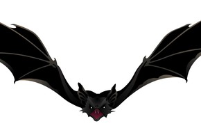 Picture background, wings, bat