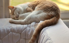 Picture cat, sofa, sleeping