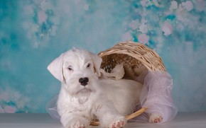 Picture basket, dog, puppy, fabric