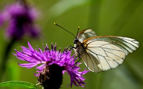 Picture flower, macro, butterfly, animal