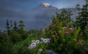 Picture flowers, mountains, fog