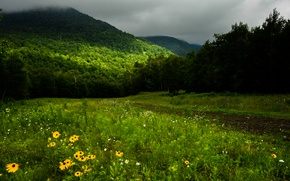 Picture greens, forest, grass, trees, flowers, mountains, clouds, Canada, Quebec