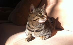 Picture animals, cat, the sun