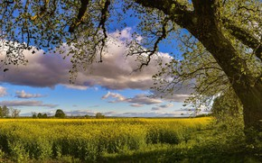 Picture field, the sky, nature, tree, spring